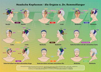 Mini-Poster: Headsche Kopf-Zonen Organe